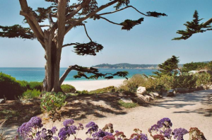 Carmel CA Beach Therapy Counseling