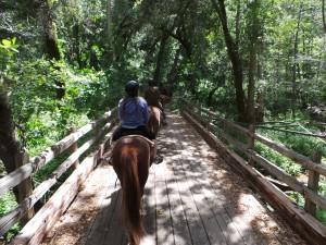 Trail Riding 5-17-15